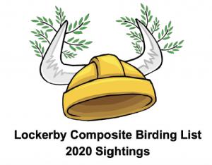 LCS Birding logo with vikings helmet