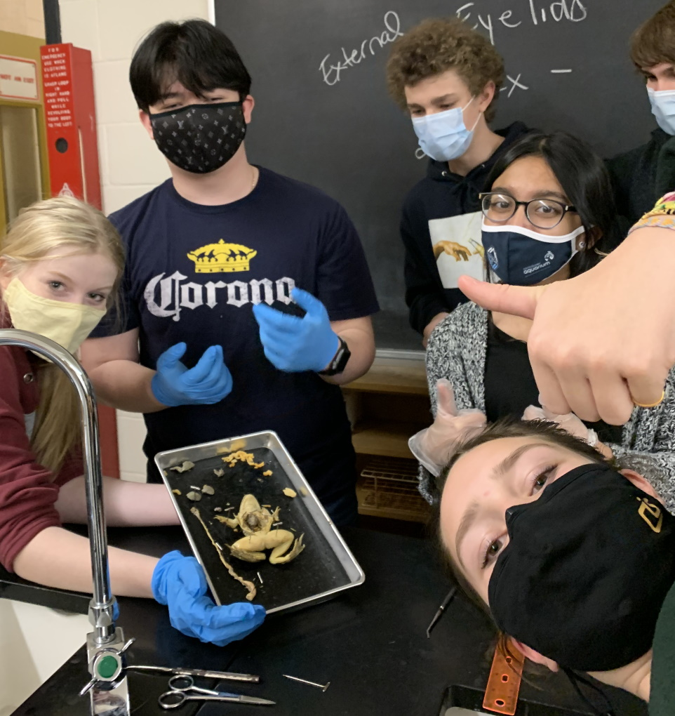Dissecting a frog